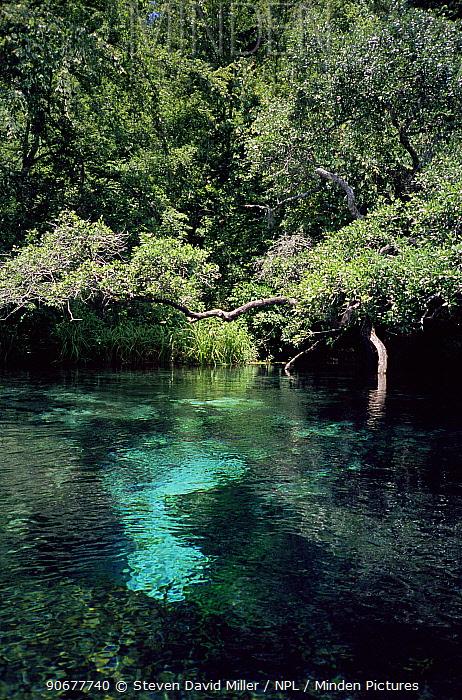 River in Ichetucknee State Park, Florida, USA  -  Steven David Miller/ npl