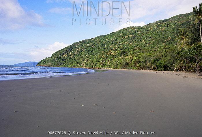Beech and tropical rainforest Cape Tribulation, Australia  -  Steven David Miller/ npl