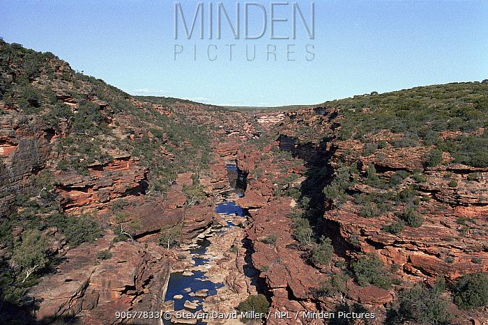 Murchinson Gorge in Kalbarri National Park, western Australia  -  Steven David Miller/ npl