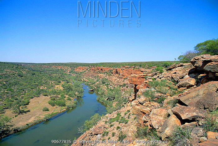 Hawks Head eroded sandstone cliffs Kalbari National Park, Western Australia  -  Steven David Miller/ npl