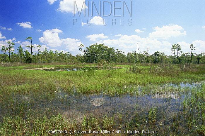 Everglades scenic and Big Cypress Basin, USA  -  Steven David Miller/ npl