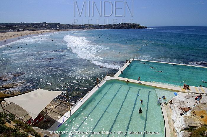 Swimming pool at the Icebergs Club, Bondi Beach, Sydney, New South Wales, Australia  -  Steven David Miller/ npl