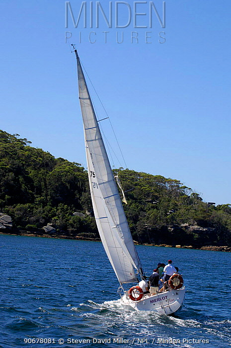 Sailing on Sydney Harbour, New South Wales, Australia  -  Steven David Miller/ npl
