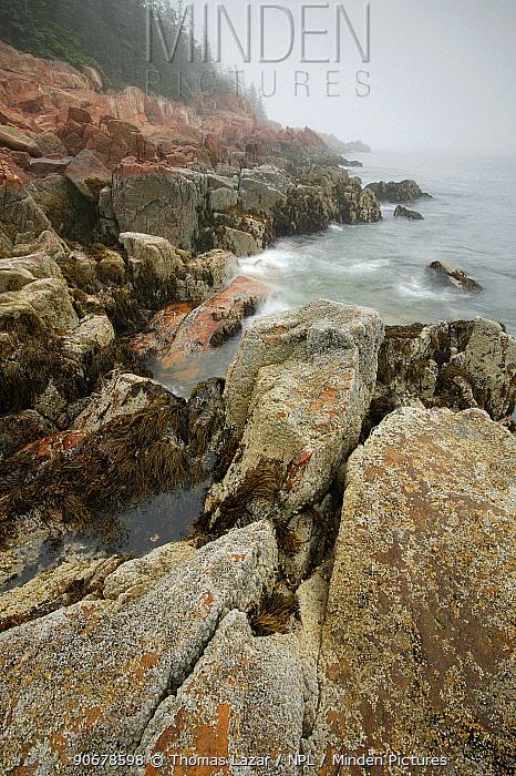 Rocky coastline in fog, Acadia National Park, Maine, USA  -  Thomas Lazar/ npl