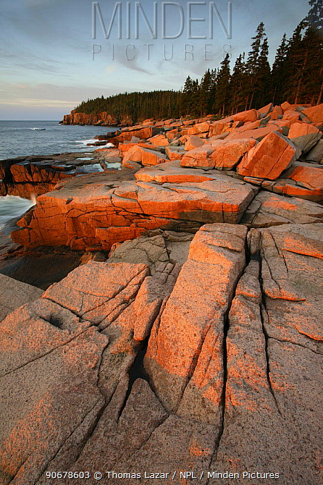 Rocky coastline at dawn, Acadia National Park, Maine, USA  -  Thomas Lazar/ npl