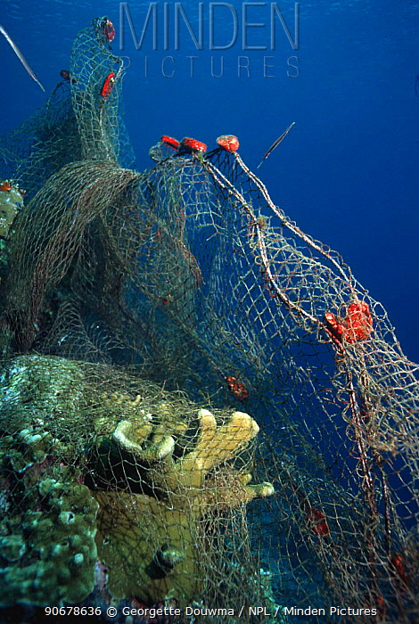 Fishing net caught on coral reef Moluccas, Indonesia  -  Georgette Douwma/ npl