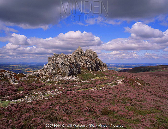 Devil's Chair, composed of Ordovician Stiperstone Quartzite, in Stiperstones NNR, Shropshire Hills AONB, UK  -  Will Watson/ npl