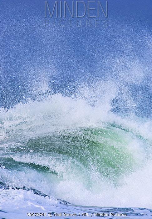Wave rolling into Saligo Bay, Islay, Argyll, Scotland, UK February  -  Niall Benvie/ npl