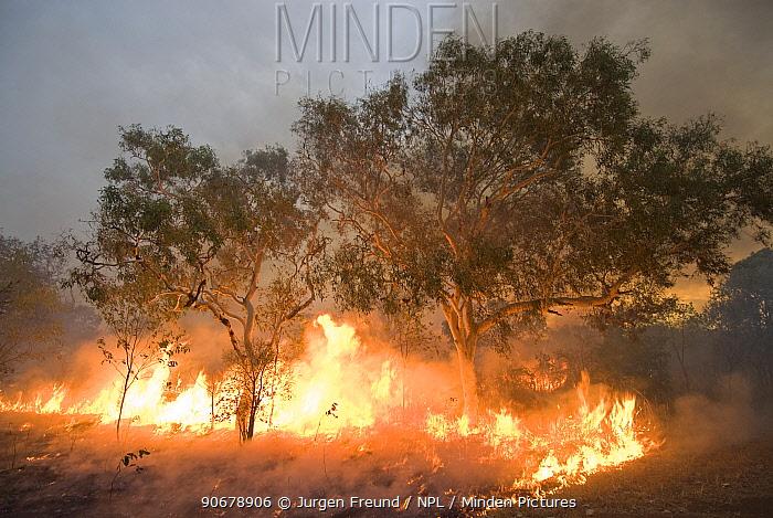 Bushfire in the outback Derby, Western Australia  -  Jurgen Freund/ npl