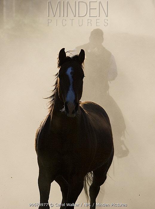 Cowboy driving a horse at Sombrero Ranch, Craig, Colorado  -  Carol Walker/ npl