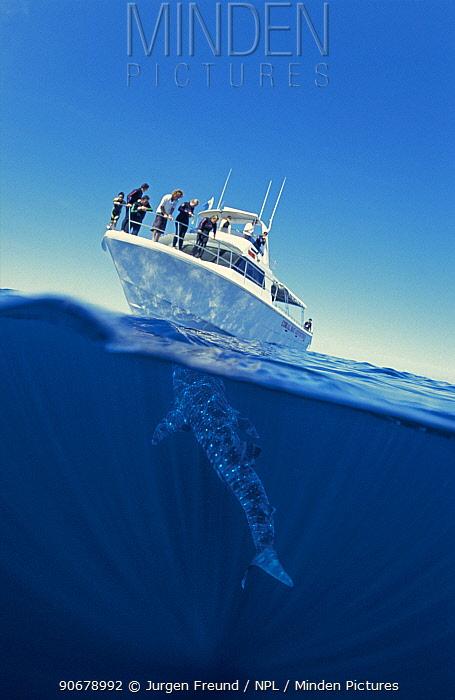 Split level of whale shark (Rhincodon typus) and tourist boat, Ningaloo Reef, Western Australia  -  Jurgen Freund/ npl