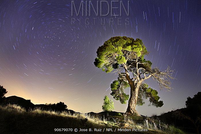 Aleppo pine tree (Pinus halepensis) photographed with long exposure at night with star trails behind, Torremanzana, Alicante, Spain  -  Jose B. Ruiz/ npl