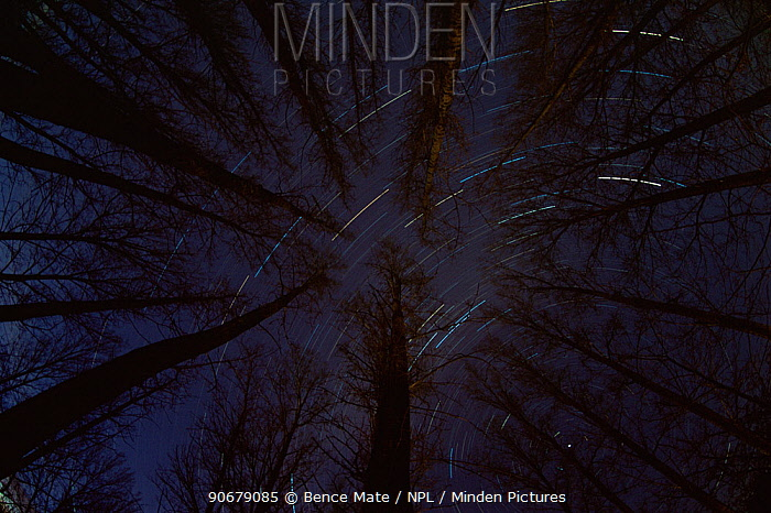 Star trails above forest at night, Hungary  -  Bence Mate/ npl
