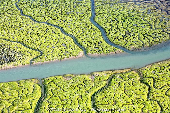 Aerial view of the Bay of Cadiz delta, Sancti Petri, C�diz, Spain  -  Jose B. Ruiz/ npl