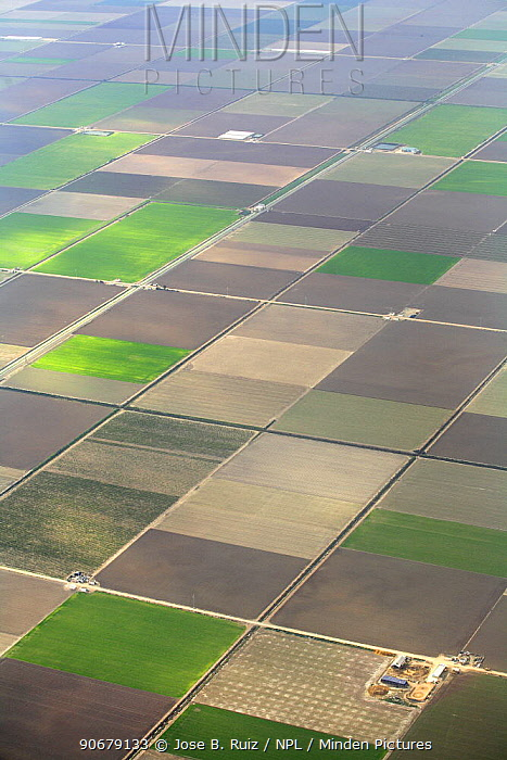 Aerial view of cultivated farmland in strips, Seville, Spain  -  Jose B. Ruiz/ npl