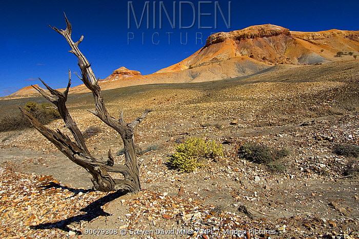 Painted Desert, Arckaringa, South Australia  -  Steven David Miller/ npl
