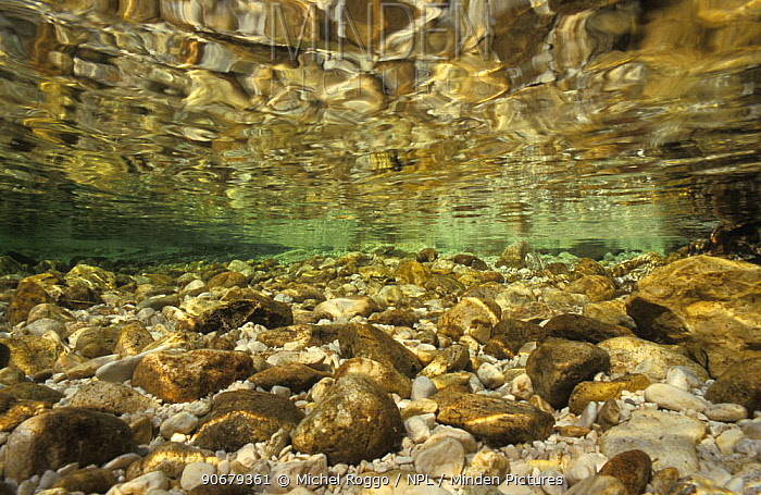 Underwater landscape in Sava river, Slovenia, September  -  Michel Roggo/ npl