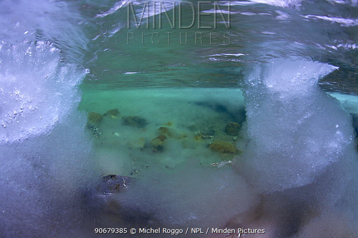 Underwater landscape in Hongrin River with ice on the river bed and surface in winter Fribourg, Gruy?re, Switzerland, December  -  Michel Roggo/ npl