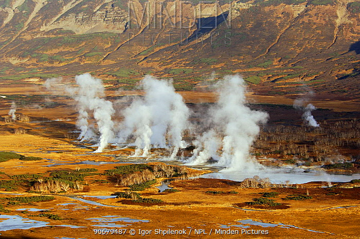 Steaming fissures and geysers in the caldera of Uzon Volcano, Kronotsky Zapovednik, Kamchatka, Far East Russia  -  Igor Shpilenok/ npl