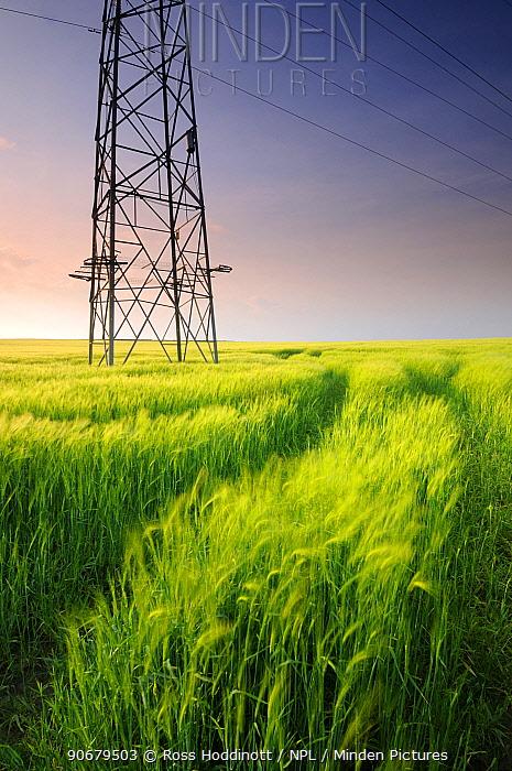 Electricity pylon and Barley field, near Bulkworthy, Devon, UK May 08  -  Ross Hoddinott/ npl