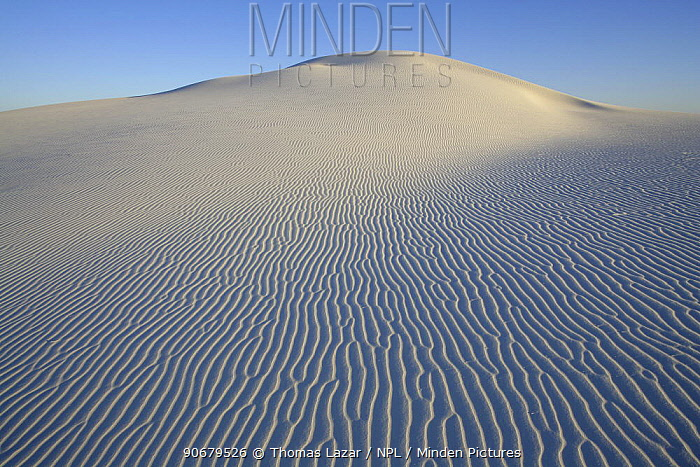 Ripples in white sand running down side of large rounded dune, White Sands National Monument, Chihuahuan Desert, New Mexico, USA  -  Thomas Lazar/ npl
