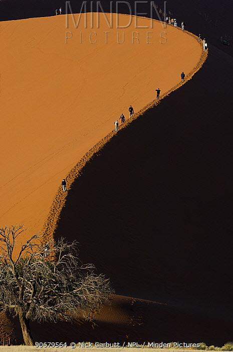 Tourists climbing giant sand dunes (dune 45) at Sossusvlei, Namib Desert, Namibia July 2008  -  Nick Garbutt/ npl