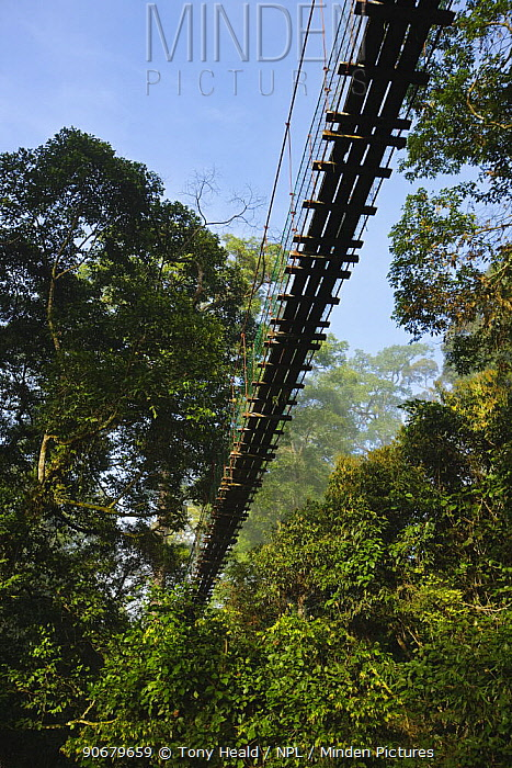 Canopy walkway in lowland dipterocarp rainforest, Danum Valley, Sabah, Borneo, September 2008  -  Tony Heald/ npl