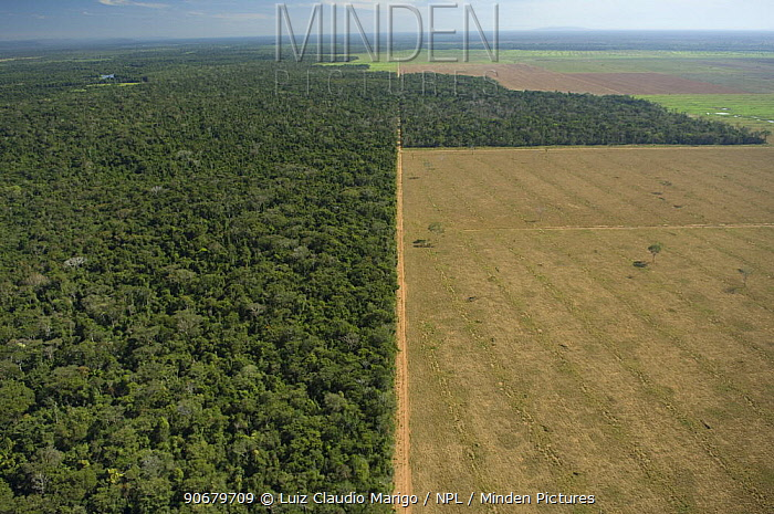 Aerial view of cattle pasture land created from tropical rainforest, Western Mato Grosso State, Western Brazil  -  Luiz Claudio Marigo/ npl