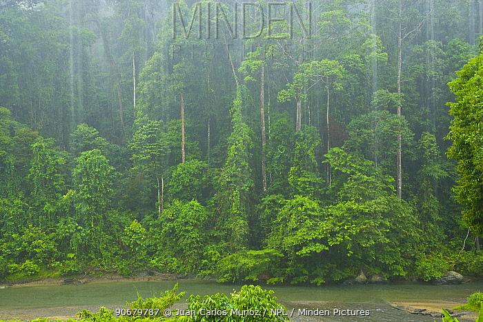 Tropical rainstorm in tropical rainforest, Danum Valley Forest Reserve, Sabah, Borneo, Malaysia 2007  -  Juan Carlos Munoz/ npl