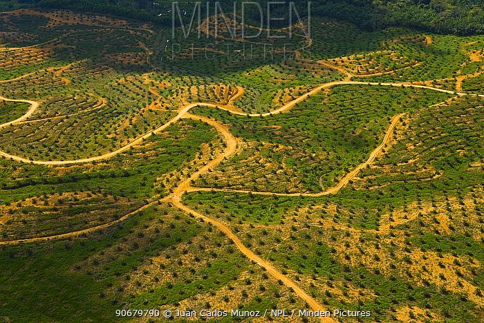 Aerial view of palm oil plantation on deforested land, Sabah, Borneo, Malaysia  -  Juan Carlos Munoz/ npl