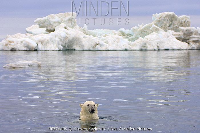Polar bear (Ursus maritimus) swimming in the water in front of an iceberg, Beaufort Sea, Arctic Ocean, Alaska  -  Steven Kazlowski/ npl