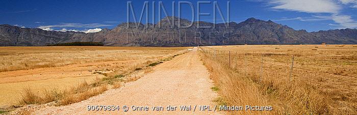 Upaved road and mountains, South Africa December 2008  -  Onne Van Der Wal/ npl