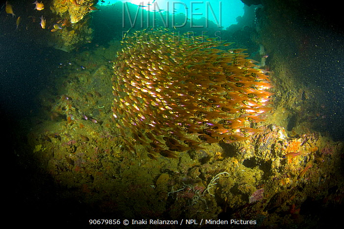 Large group fish schooling in a cave, Nosy Ve, Anakao, Tulear, South Madagascar  -  Inaki Relanzon/ npl
