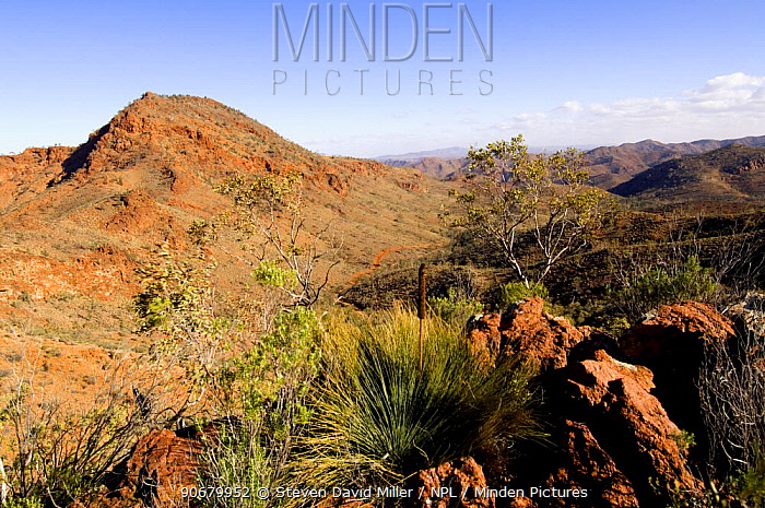 Arkaroola Wilderness Sanctuary, Gammon Ranges, northern Flinders Ranges, South Australia, May 2007, Note the tracks of a 4WD vehicle cutting deep into the valley  -  Steven David Miller/ npl