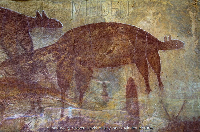 Aboriginal cave paintings at Wallaroo art site, one of the Quinkan rock art sites, Jowalbinna, Cape York, Queensland, Australia  -  Steven David Miller/ npl