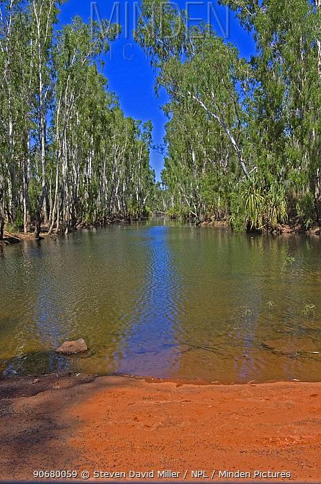 Paperbark trees (Melaleuca sp) line the banks of the King Edward River, The Kimberley, Western Australia, September 2007  -  Steven David Miller/ npl