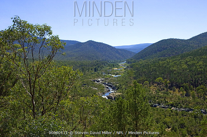 View of the Snowy River from The Barry Way, Kosciuszko National Park, New South Wales, Australia, Spring 2008  -  Steven David Miller/ npl