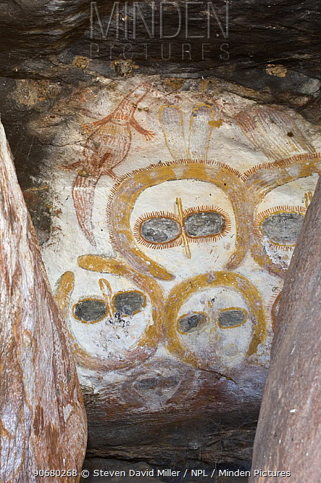 A rock art shelter in the northern Kimberley region features a cluster of Wandjina figures peering out from the sandstone rock surface, Northern Kimberley region and the Mitchell Plateau, Western Australia  -  Steven David Miller/ npl