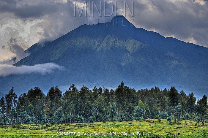 Parc National des Volcans, Volcanoes NP, Virunga Mountains, Rwanda, Africa, habitat of the Mountain gorillas  -  Andy Rouse/ npl