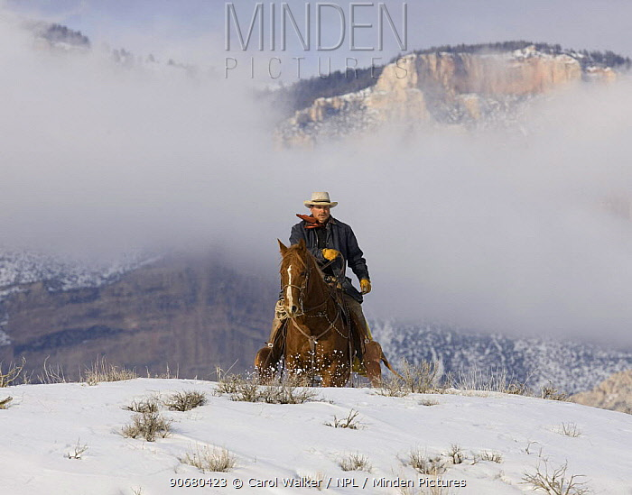 Cowboy riding over hill in snow, Sombrero Ranch, Craig, Colorado, USA Model released  -  Carol Walker/ npl