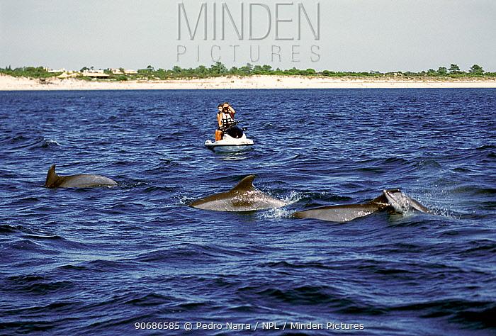 Jet skiers watching Bottlenose dolphins (Tursiops truncatus) porpoising, Sado Estuary, Portugal  -  Pedro Narra/ npl