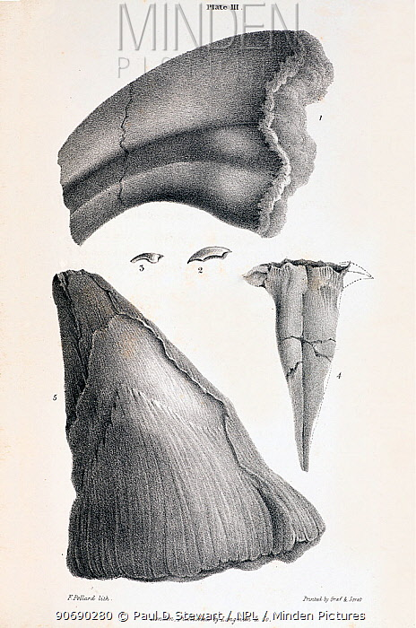 Horn Minden minden pictures stock photos illustration of horn of the
