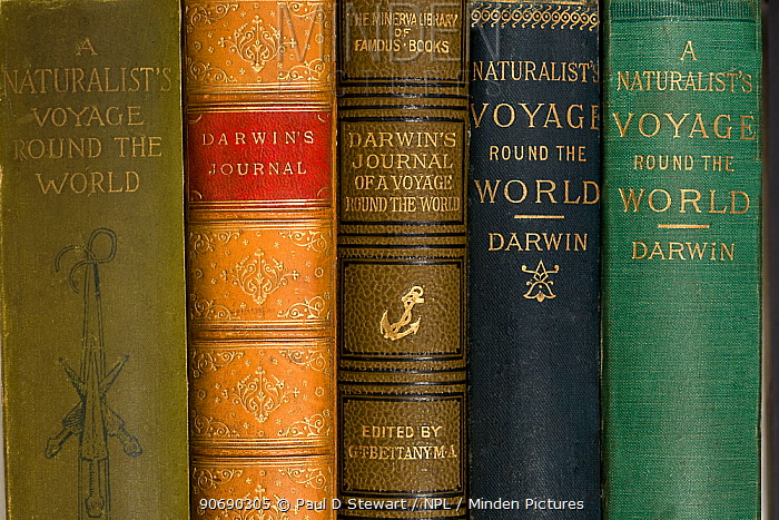 Various mid to late 19th Century editions of Darwin's 'Journal of Researches' from his Beagle voyage After the Origin of Species this book is Darwin's most numerously republished and widely read book He noted 'the success of this my first literary child always tickles my vanity more than any of my other books' Originally published in 1839 as the third part of 'The narrative of the voyages of HM Ships Adventrue and Beagle' edited by Fitzroy, with the subsidiary title 'Journal and Remarks' for Darwin's contribution Since then it has changed its name four times Today it is referred to as 'The Voyage of the Beagle' but this shelf shows the earlier variants The standard John Murray version is in Navy Blue, second from the right  -  Paul D Stewart/ npl