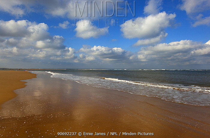 View of beach and sea at lowtide, Blakeney Point, Norfolk, UK, October  -  Ernie Janes/ npl
