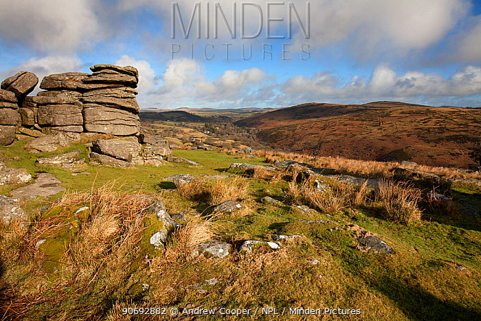 Combestone Tor in Dartmoor National park moorland Bronze-age 'Reave' lines can be seen on the far hill UK, February  -  Andrew Cooper/ npl