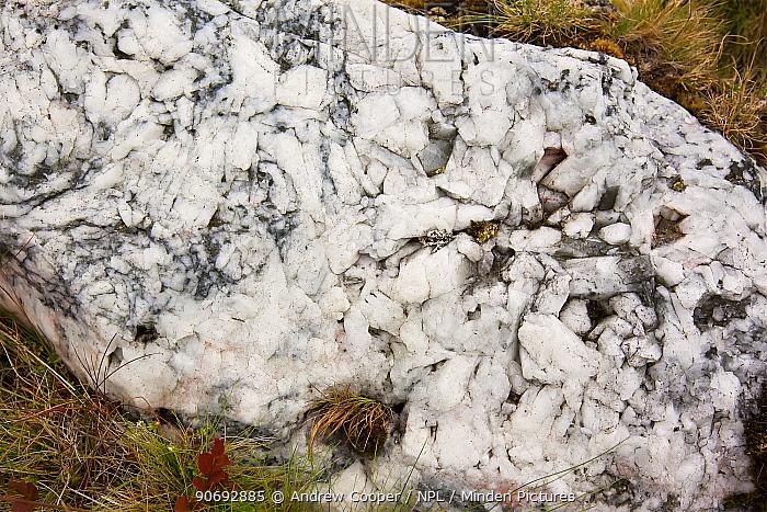 Calcite vein between grass Dartmoor National Park, UK, June  -  Andrew Cooper/ npl