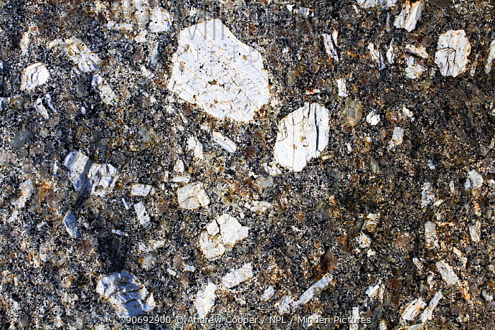 Large porphyritic crystals in granite Devon, UK  -  Andrew Cooper/ npl