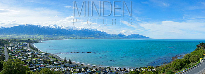 Wide angle view of coastline, town and mountains Kaikoura, New Zealand, October  -  Andrew Walmsley/ npl