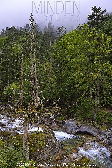 Rapids 'du pas de l'ours' in forest France, Pyrenees, September 2012  -  Loic Poidevin/ NPL