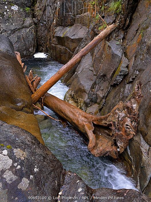 Flotsam wood in rapids 'du pas de l'ours' French Pyrenees, France, September 2012  -  Loic Poidevin/ NPL